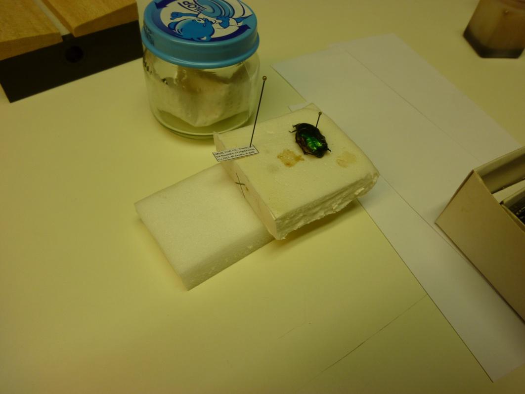 entomologia 10_rid