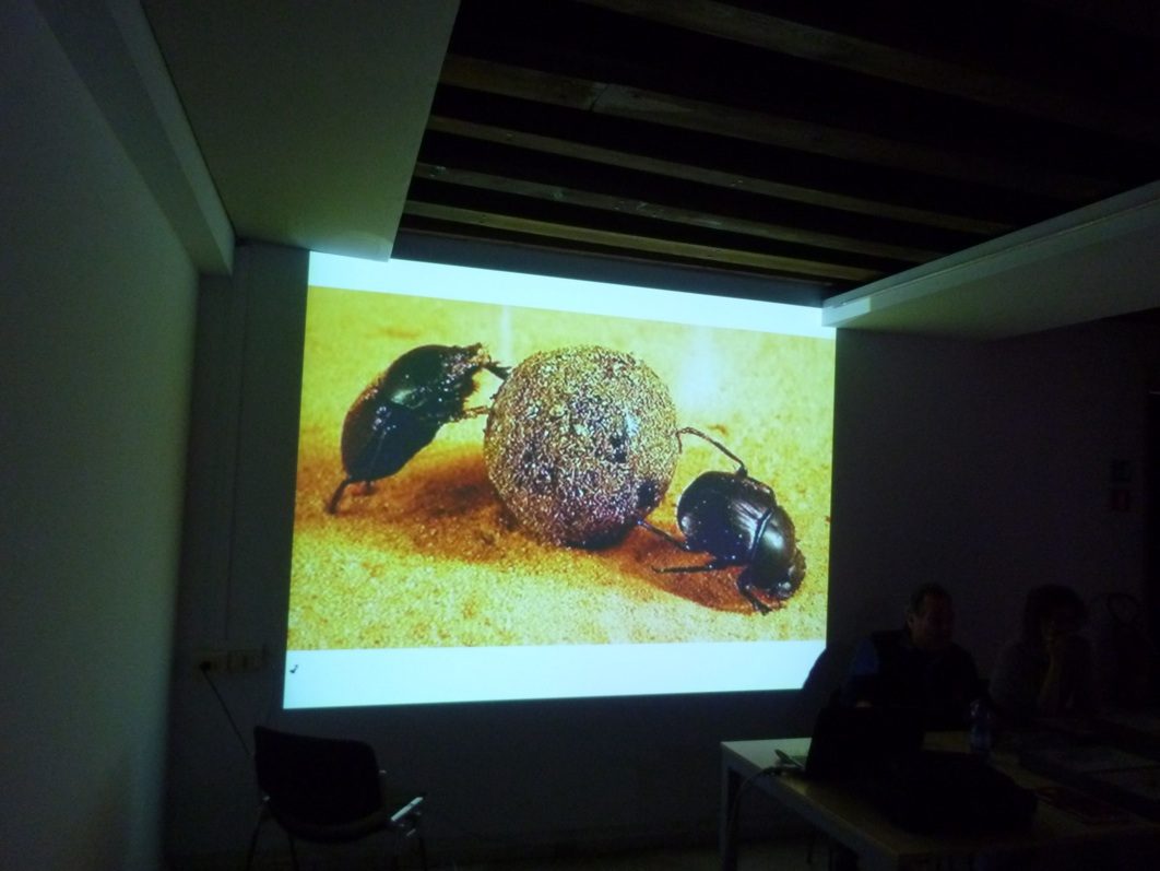 entomologia 4_rid