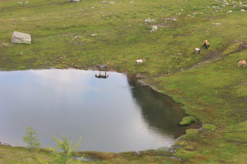 Cavallo si specchia sul Lago di Valsorda