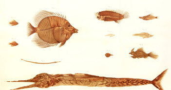 1874 pesci bolca de_zigno2
