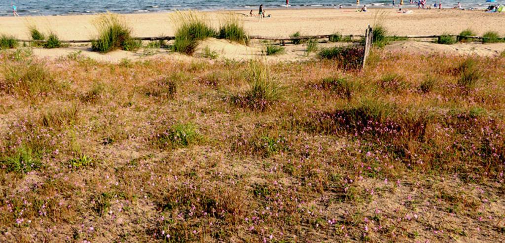 habitat dunali